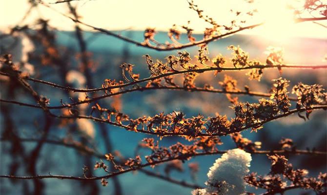 В Украину на пару дней идет настоящая весна, а затем снова вернется зима